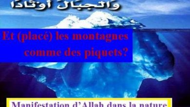 Photo of Manifestation d'Allah dans la nature