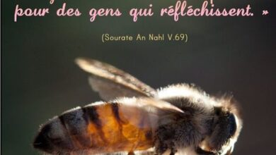 Photo of Les abeilles